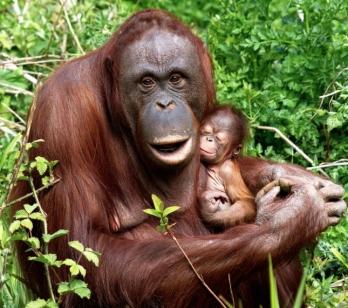 Monkey & Mama